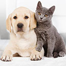 Конкурс  «Royal Canin» (Роял Канин) «Kitten&Puppy College»