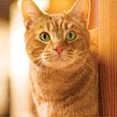 Акция  «Friskies» (Фрискис) «Ваш солнечный кот в дом уют принесет!»