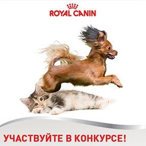 Сухие корма Royal Canin (Роял Канин) для собак