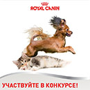 Конкурс  «Royal Canin» (Роял Канин) «Весенний конкурс»