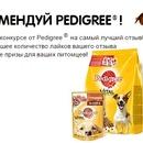 Подарок для щенка | Мир щенка | Pedigree®